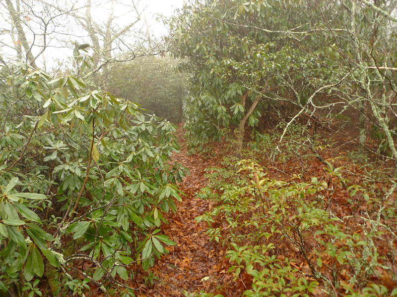 There are 8 or 9 sections to the upper Wolf Ridge trail and here is the part which tunnels thru rhododendron.