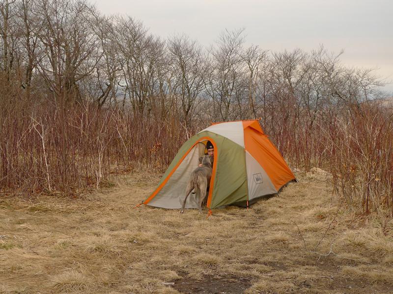 Rob's tent on the Hangover.