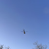 Of course my wilderness experience is interrupted (again and again) by Army helicopters buzzing the area.