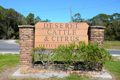 Deseret Cattle & Citrus Ranch