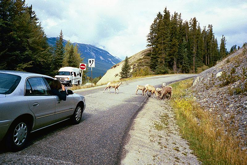 06 - Sheep Jam