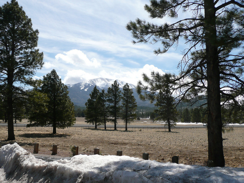 (Kendrick Park, between Flagstaff and South Rim of Grand Canyon)
