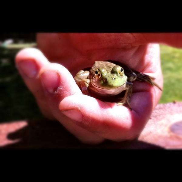 Found a frog in a pool.