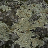 Lichens on Rock, Coos County, New Hampshire