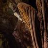 Lehman Cave Disc