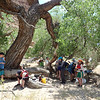 Lunch Under a Giant Cottonwood