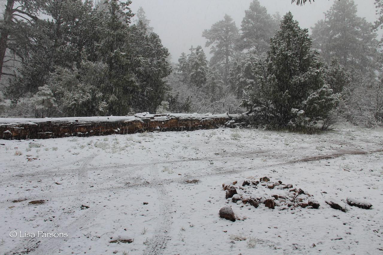 A Blizzard?