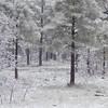 Frosty White Needles