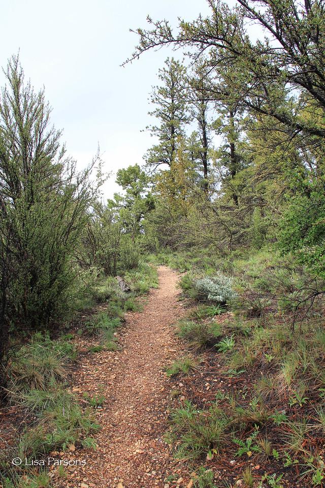 Drier Trail