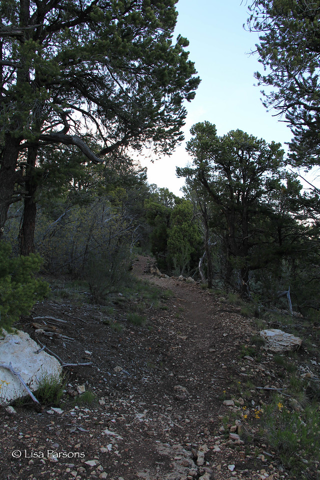 Rim Trail in the Morning