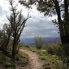 Trail Along the Rim