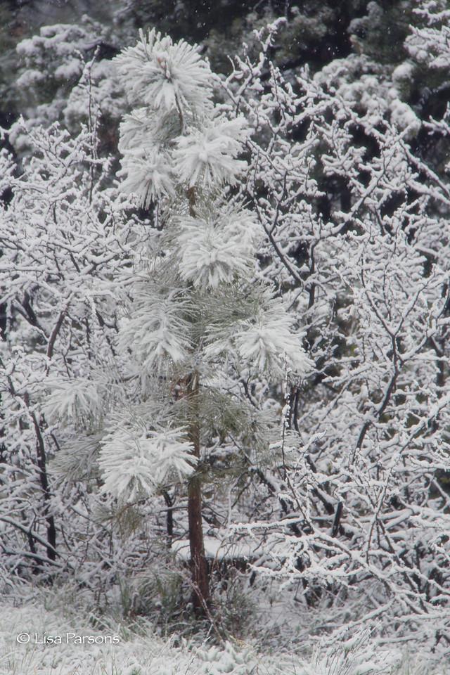 Whoville Tree
