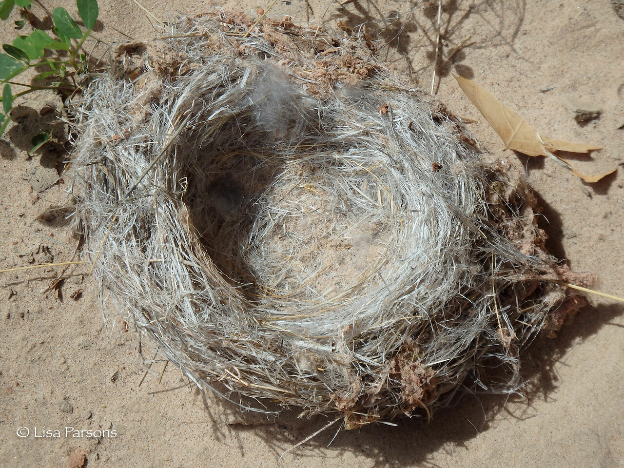 An Empty Bird's Nest