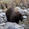 Big Brown Mother Bear