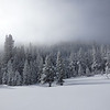 Snow Covered Forest and Ice Fog on Edge of Grass Lake Meadow in the Sierra Nevadas