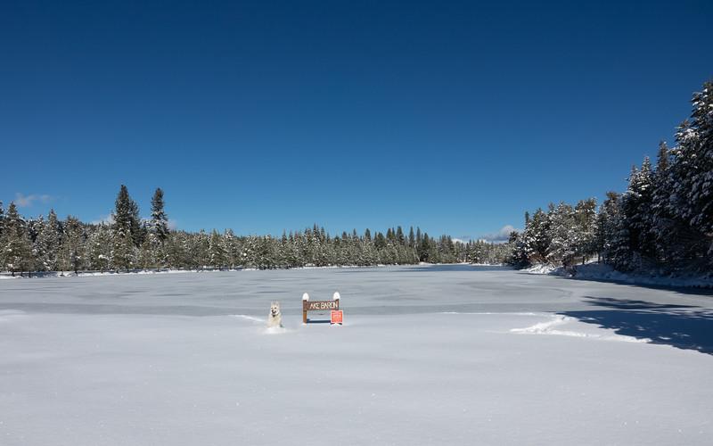 White German Sheperd in Snow at Frozen Lake Baron