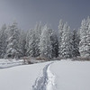 Ski Tracks in Snow, Snow Fog, and Snow Covered Pine Trees in Grass Lake Meadown in the Sierra Nevadas