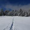 Cross Country Ski Tracks in Frest Snow in Hope Valley California
