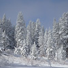 Snow Covered Forest on Edge of Grass Lake Meadow in the Sierra Nevadas
