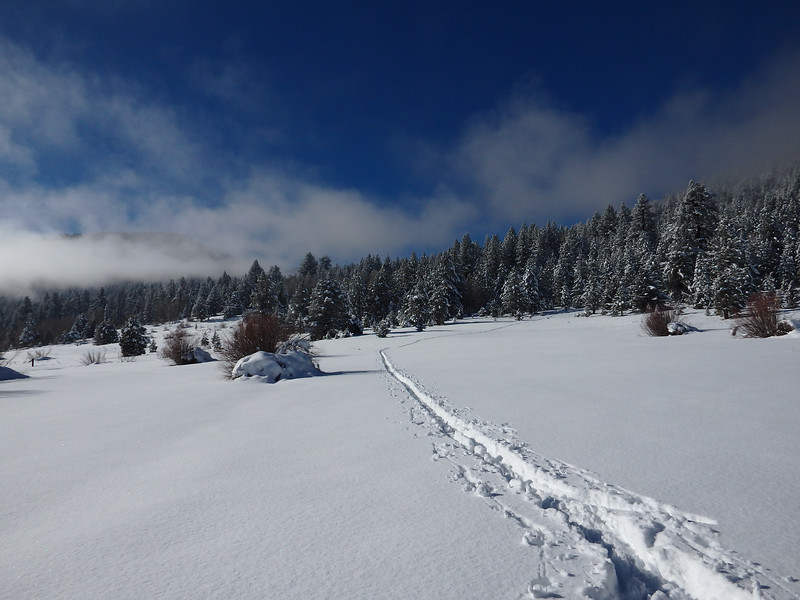 Fresh Cross Country Ski Tracks From the Forest in Hope Valley Calfornia