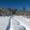 Belgina Malinois on Snowshoe Track Along the Upper Truckee River in Lake Tahoe