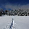 Cross Country Ski Tracks in Frest Snow in Hope Valley California