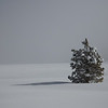 Single Snow Covered Tree in Meadow Shrouded in Ice Fog