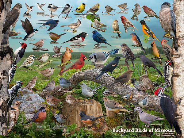 Backyard Birds of Missouri ID Poster