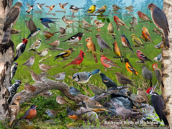 Backyard Birds of Michigan ID Poster