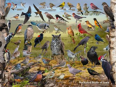 Backyard Birds of Iowa ID Poster