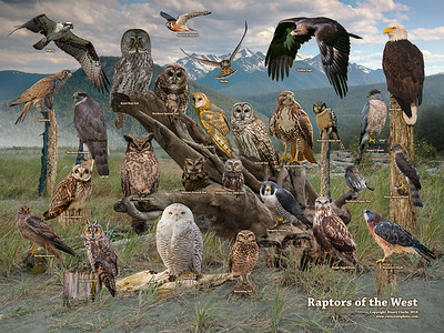 Raptors of the West 2018