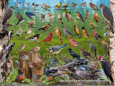 Backyard Birds of Southern Ontario ID Poster