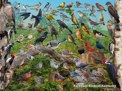 Backyard Birds of Kentucky ID Poster