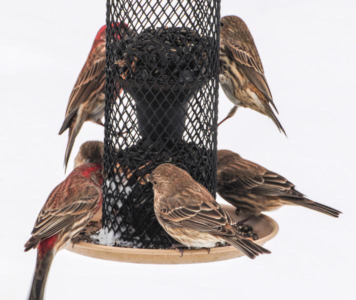 Bird Buffet