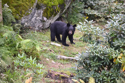 Baby Bear 6