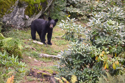 Baby Bear 4