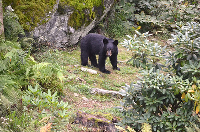 Baby Bear 7