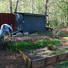 Digging up daylillies and red hot pokers as the backyard is going to get a make-over.. make room for hot tub and new shed..