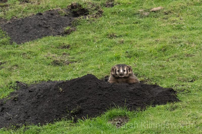 fresh dig