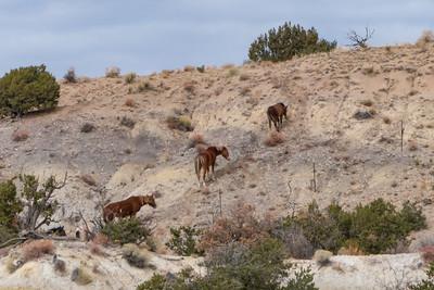 Maybe Wild Horses