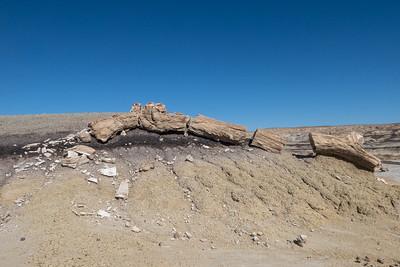 Long Petrified Wood Log