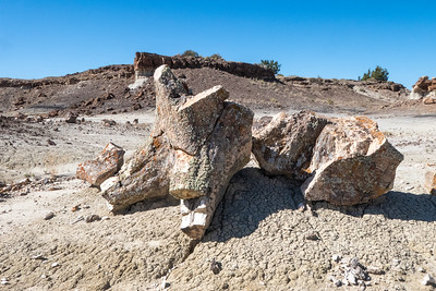 Another Petrified Wood Stump