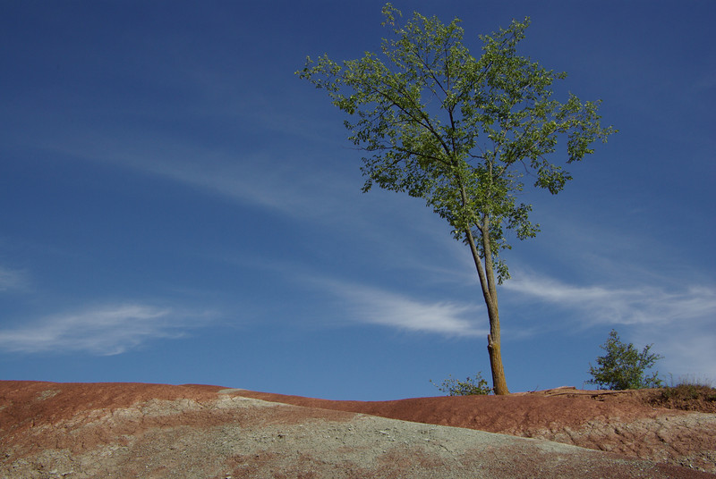 Badlands, trees and sky