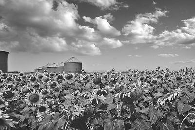 Field of Sun (2)