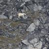A large male polar bear on the cliffs of Monumental Island