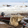 "Polar Bear skin drying on the ""beach"" at Pond Inlet"