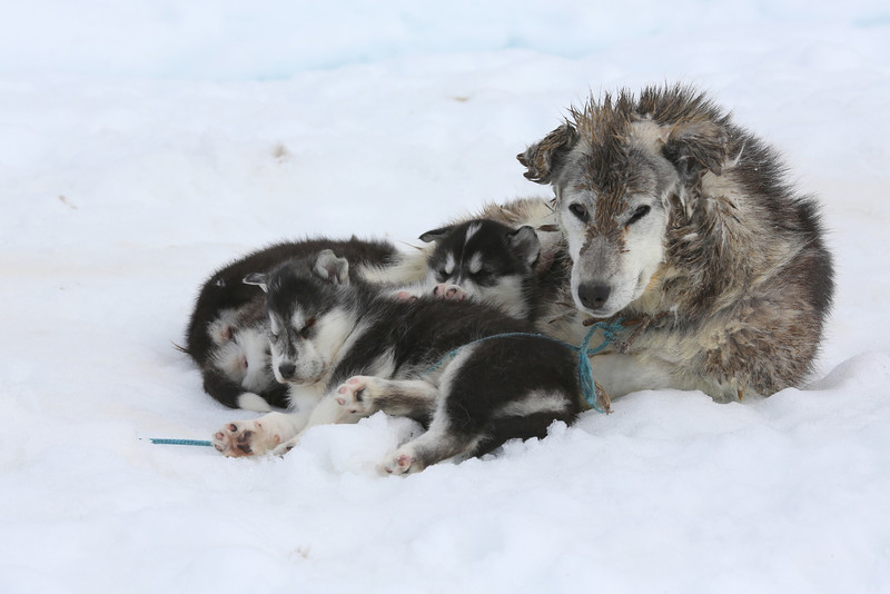 Our guard dog and her three puppies