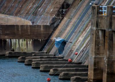 Bagnell Dam & Wildlife-11