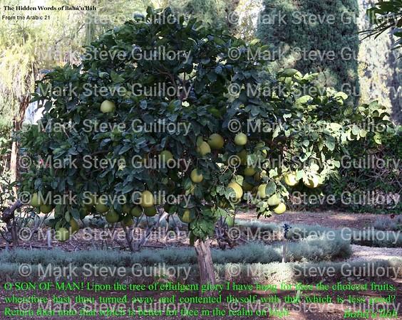 Arabic Hidden Words 21 - Fruit of tree