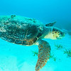 Bahama_Banks_2005-02-0928